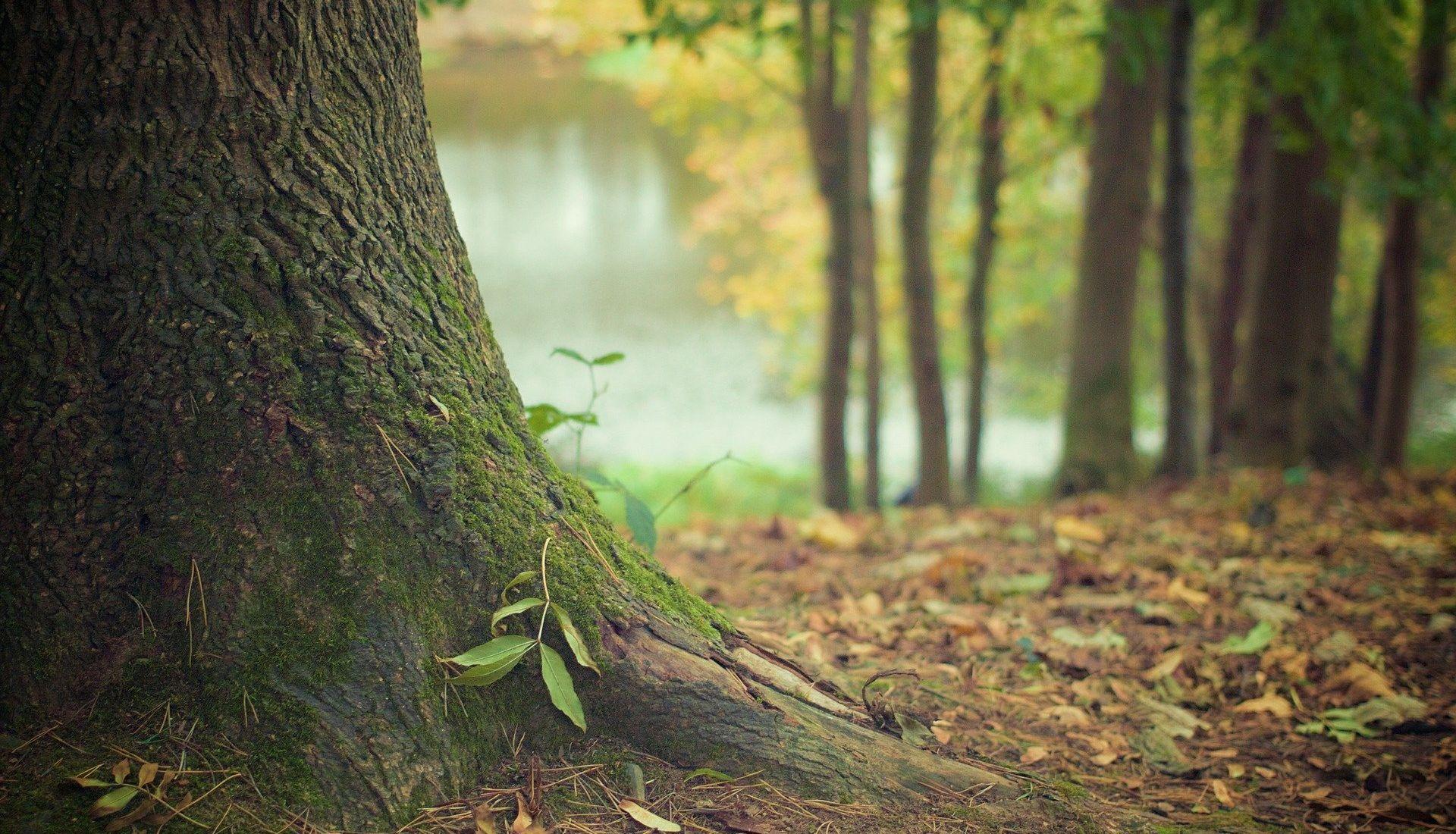 L'alliance ancestrale des arbres et des champignons